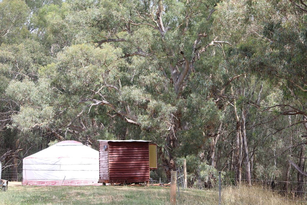 Overlooking Red Gum Forest