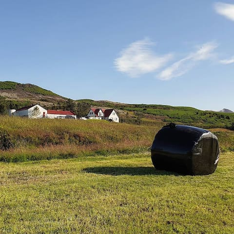 A small and cosy farm close to Reykjavík city