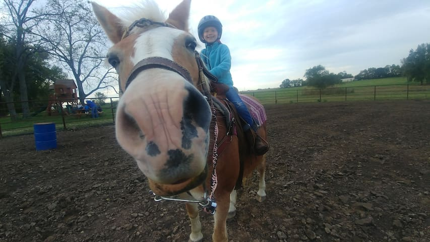 C Bar C Farm; An Equine Experience
