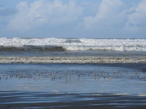 Beach Lovers' Dream Condo at Copalis