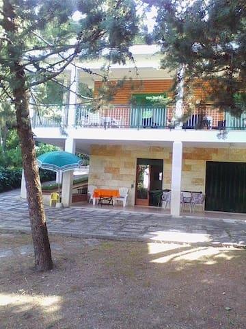 Ampia villa in pineta - San Menaio