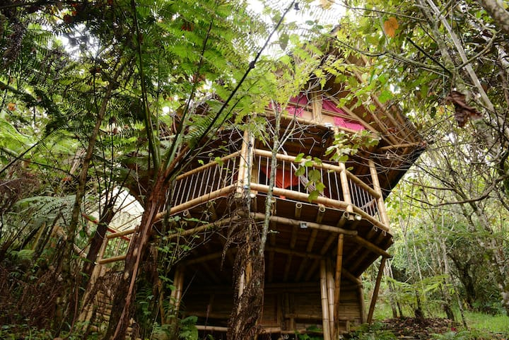 Adriana´s Bambú Lodge