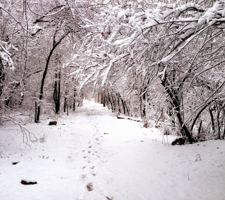 Winter trails, Saugatuck State Park 4 miles away.