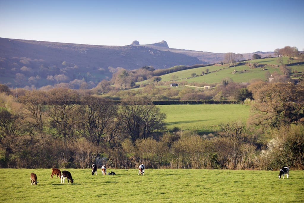 The view to Haytor from Town Barton
