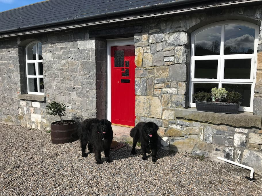 Dogs are very friendly but can be moved to another area away from the cottage if you'd prefer