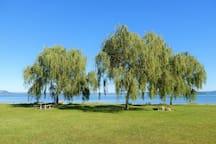 Waingaehe Park (Holdens Bay Reserve)