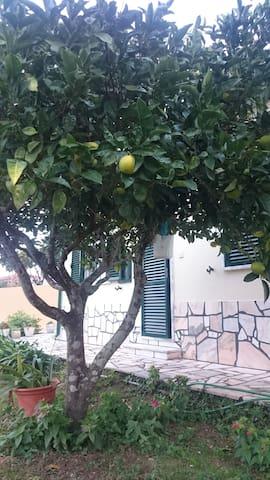 A l'ombre des orangés - Monsanto