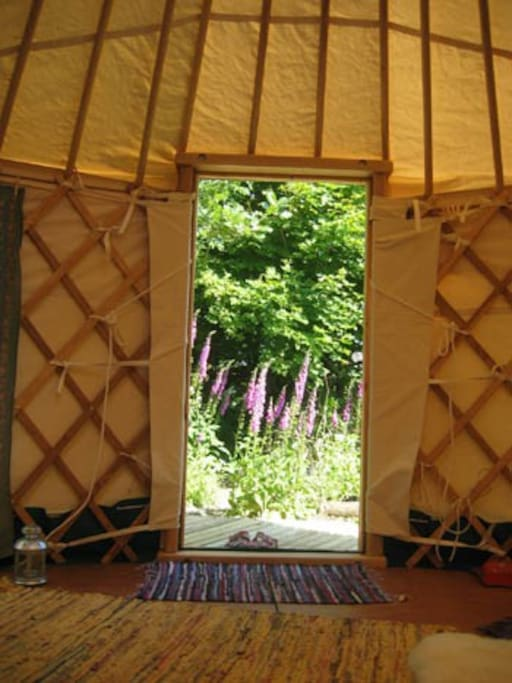 View out of Yurt in June...