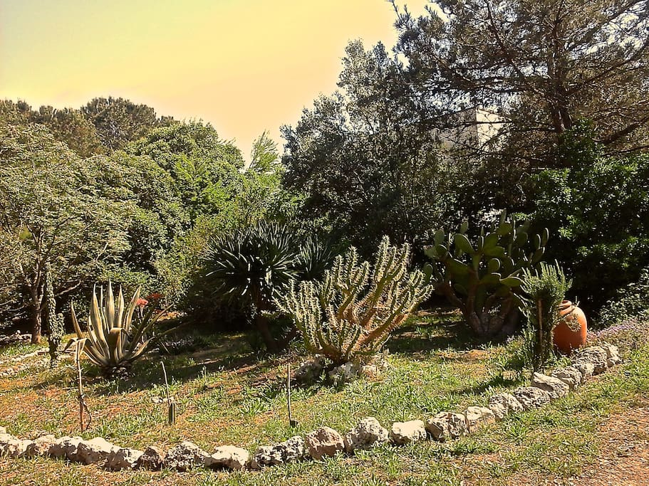 Set in a magical country estate organically managed, among trees and plants of all kinds, a few km from Lecce and 30 min. from Porto Cesareo and Gallipoli.