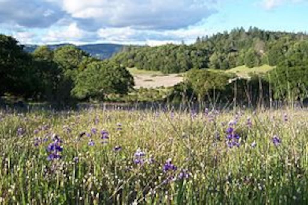 Lupine Meadows at Annadel State Park (one mile away): 5,000+ Acres of Trails, Hiking, Biking
