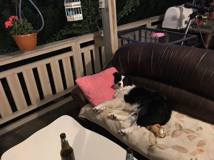 Hotel domowy dla psów, pełna pielęgnacja grooming