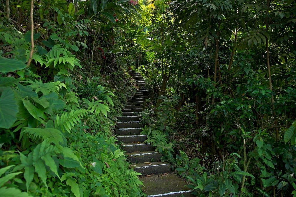 stairway to mango ridge