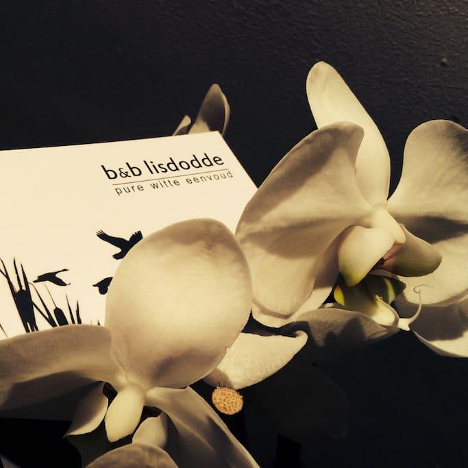 b&b Lisdodde - pure white simple