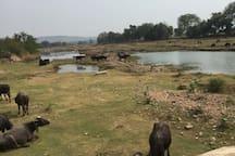 Farmer around  khajuraho