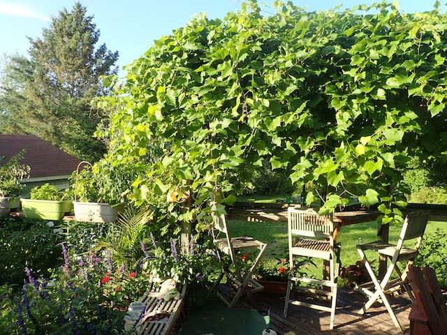 sitting under the grape vines