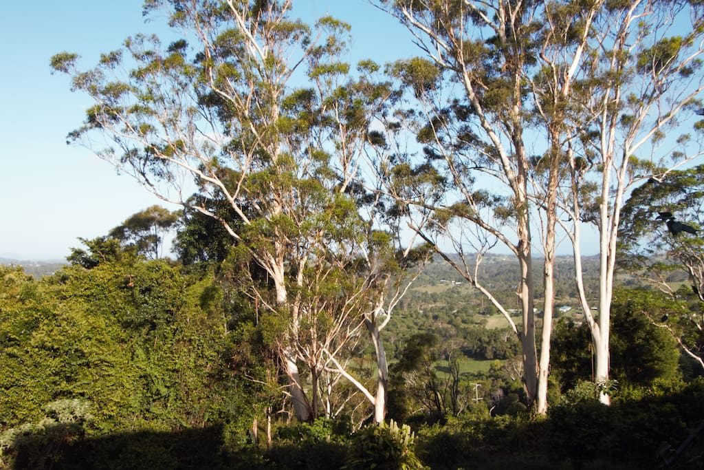 the whispering gums