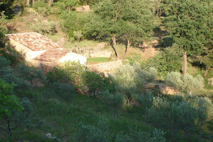 Lumière du soir sur le vallon des oliviers