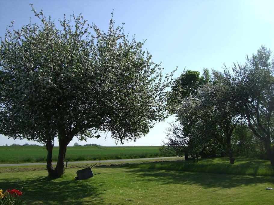 Garten mit Rasen und viel Platz und Luft!