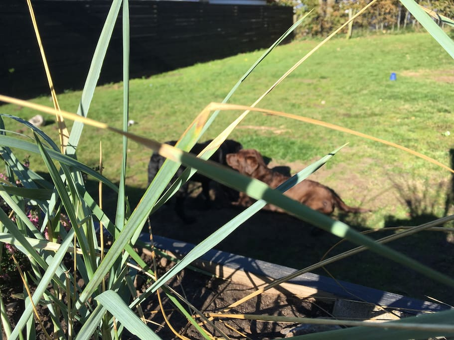 Indhegnet have (med havehøns i hønsegård)