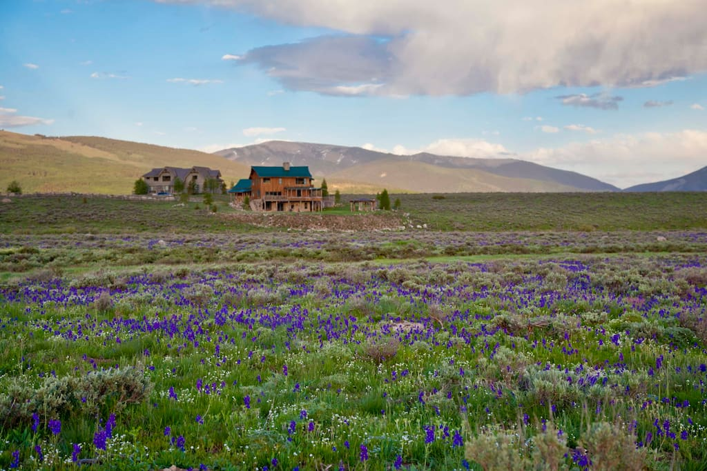35 acres of wild Larkspur surrounds the western side of our home in the early summer