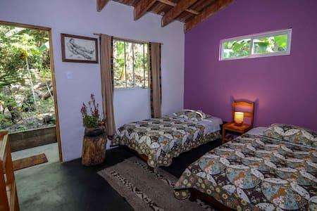 Caturra - Room 2
