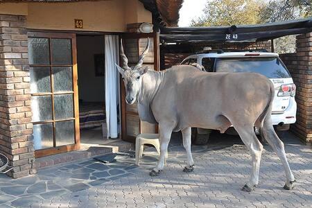 Dikhololo Game Reserve - Kuifkop 11