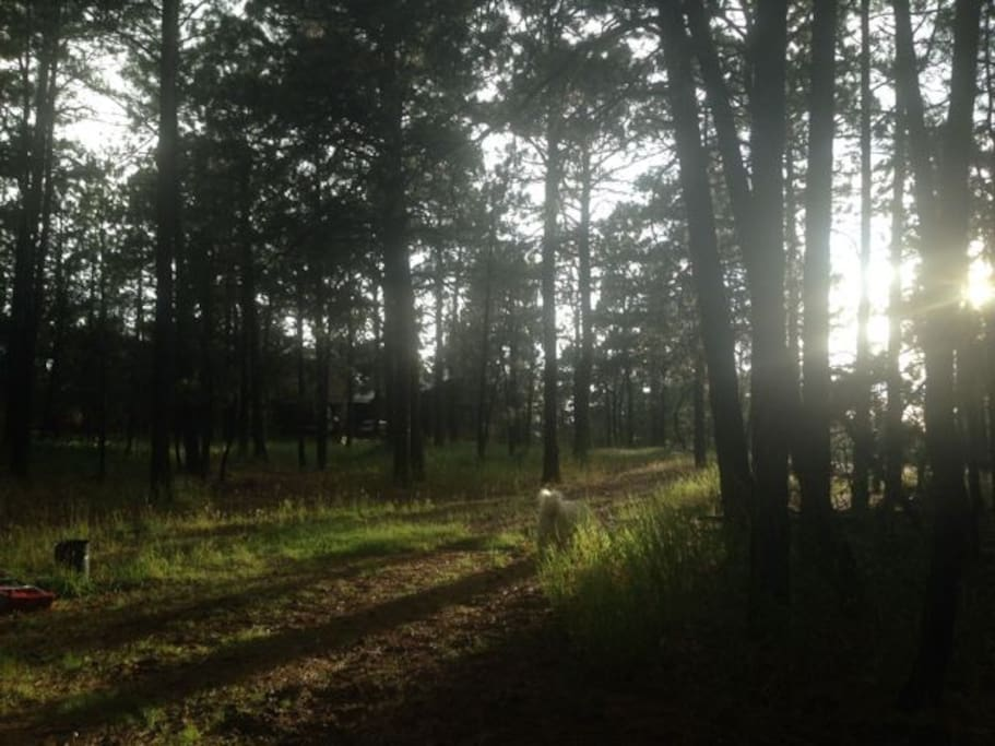Home on 5 forested acres in the Black Forest north of Colorado Springs.