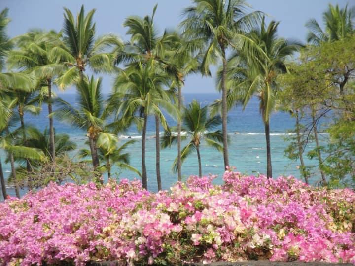 Ahhh....Paradise  OCEAN VIEWS, Snorkle, Surf,Bikes