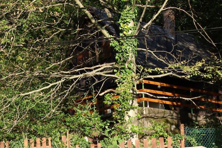 Rosehill cabin - Rózsahegy szálláshely