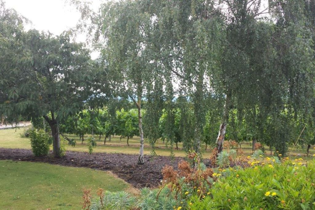Across the gardens to the vineyard.
