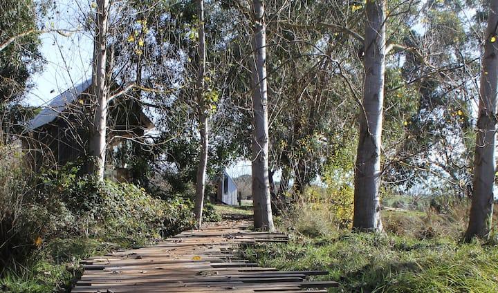 Anarres Organic Eco Village 3