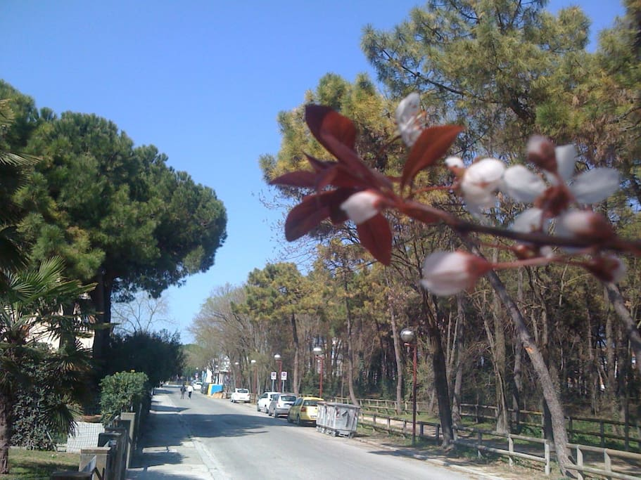 via della Fontana in bloom...
