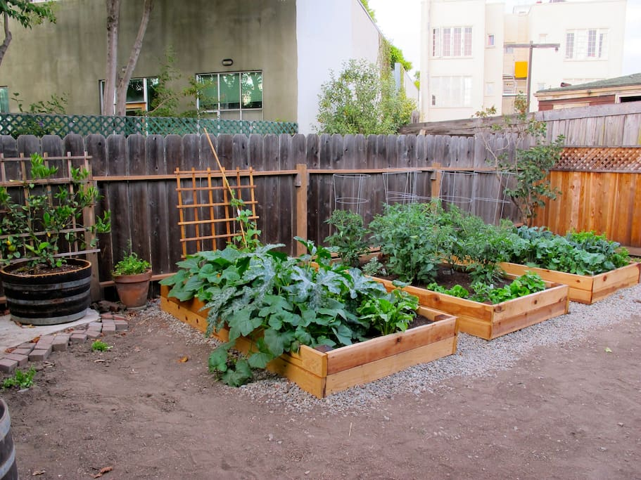 Garden with plenty of fruits and vegetables for you to harvest. We would love your help watering while you're here!