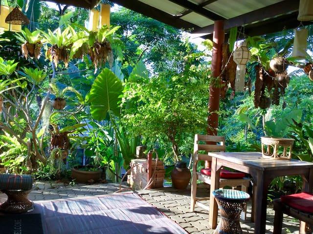 Frangipani-Baum, 2. Haus vom Strand