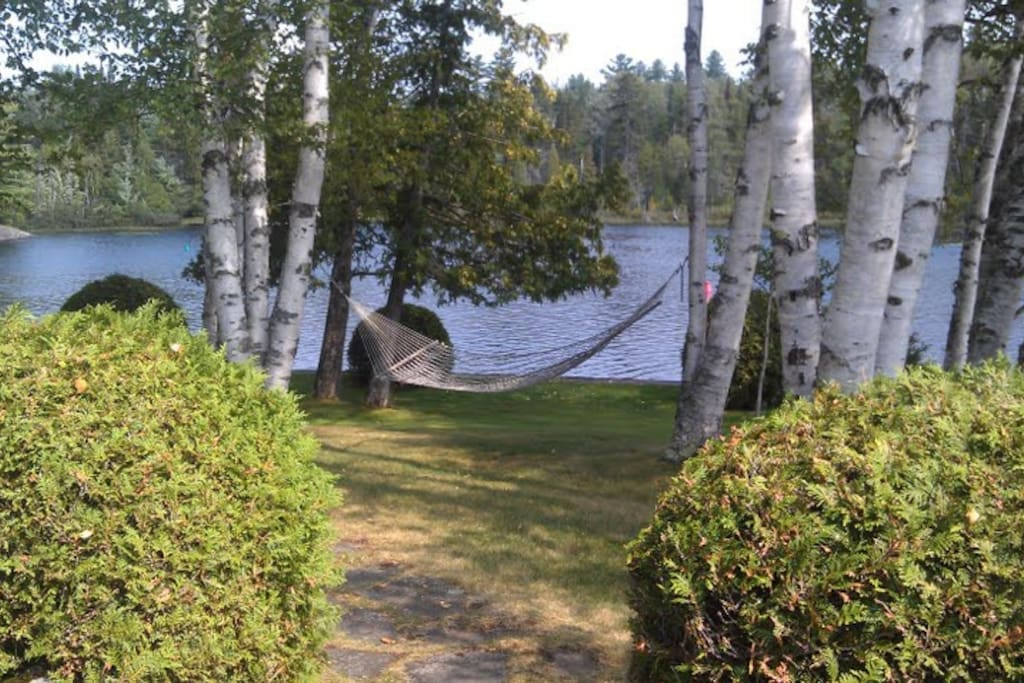 Hammock amongst white birches