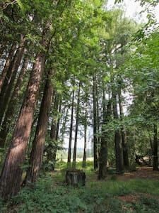 Shangrila in the Redwoods