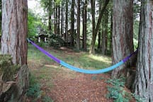 One of the two hammocks in the woods