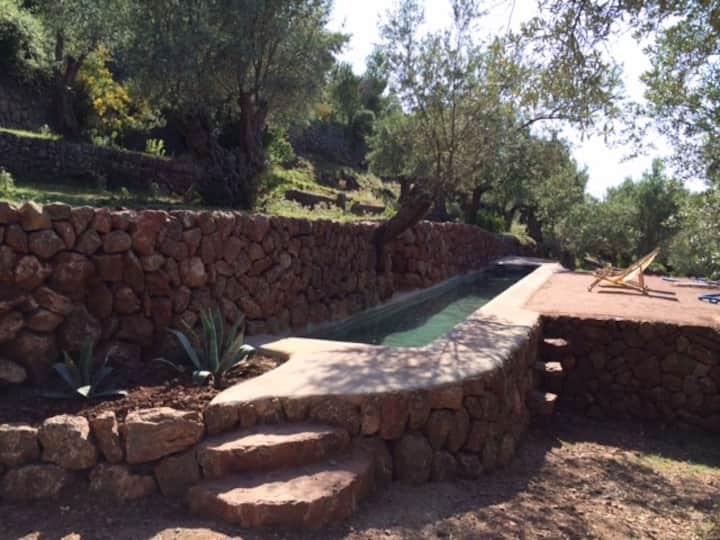 Olive farm room in Soller and Deia