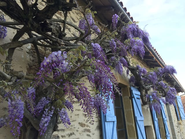 Wisteria in May
