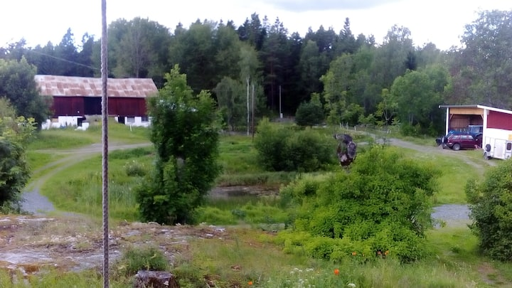 A quiet place 50 km from Stockholm. A small farm