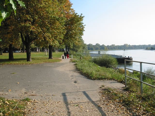 Traumhafte Lage am Rhein