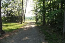 Here's our driveway, looking out to the dirt road from the cabin.