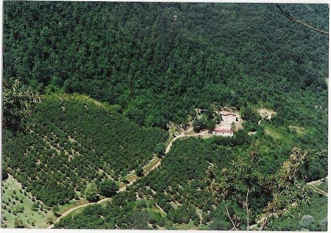 Casa nel Bosco con Piscina condivis - Belmonte In Sabina - Casa