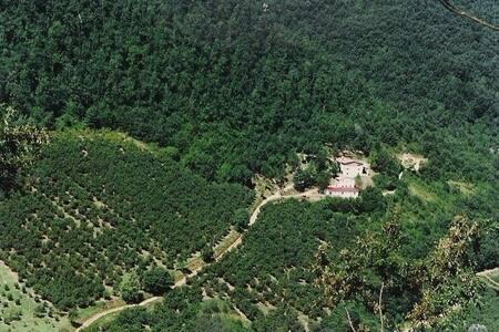 Casa nel Bosco con Piscina condivis - Belmonte In Sabina - Talo