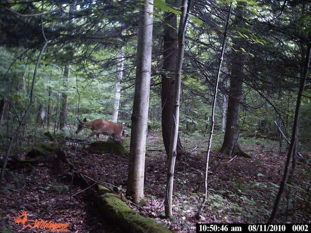 Wildlife all around.  We have seen fox, turkeys, raccoons, and many deer.