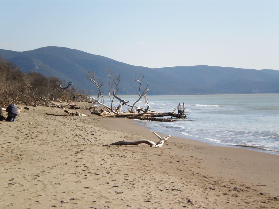 Spiaggia Parco Dell' Uccellina