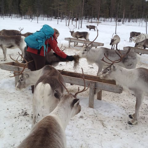 Reindeers adventures + room - Jokkmokk - House