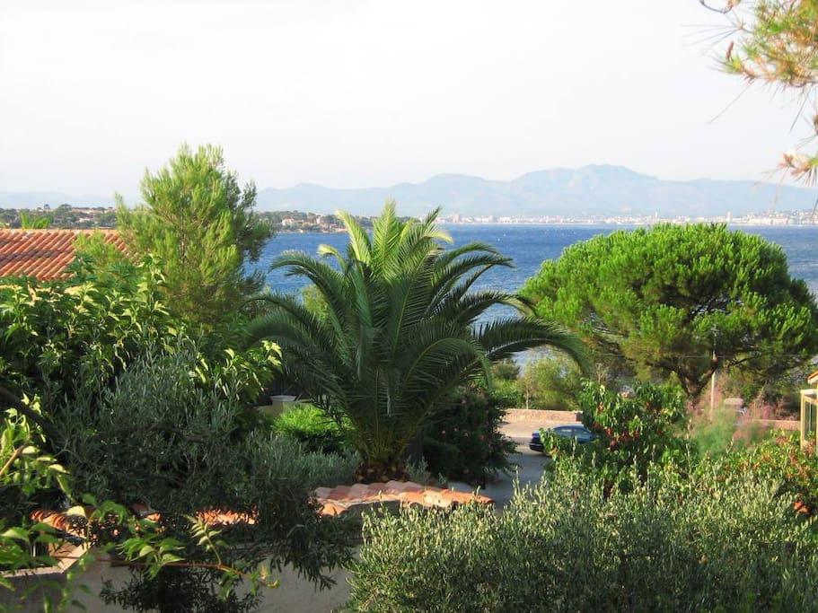 Jardin arboré , vue mer