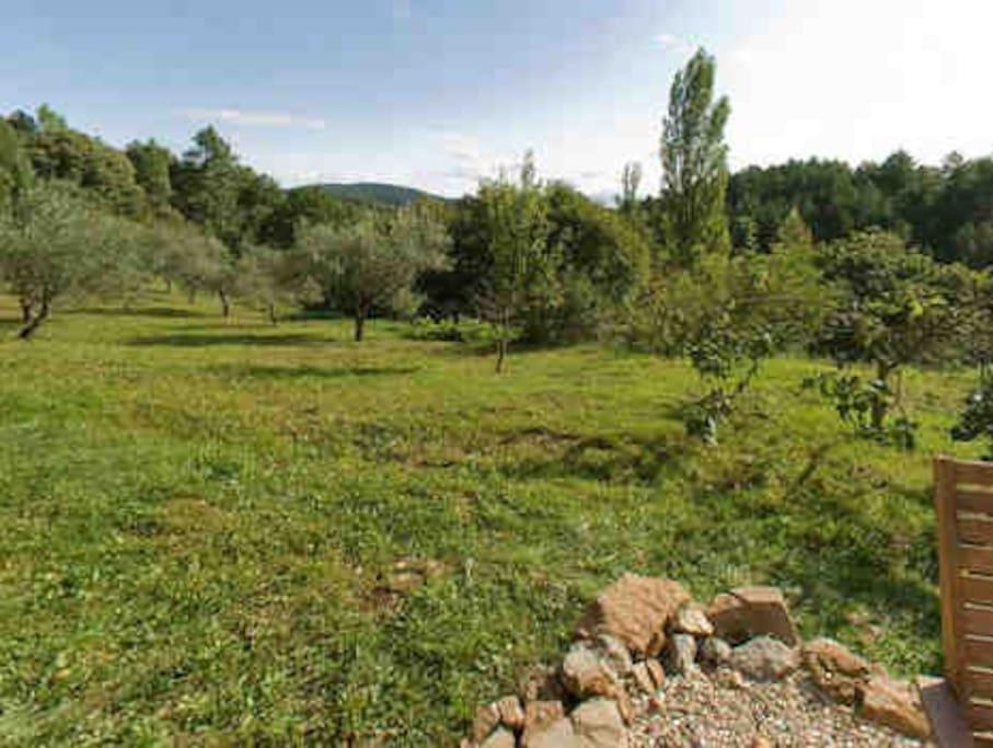 Blik vanaf het terras in de olijvengaard.