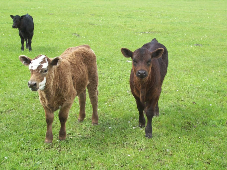 some of the residents on the farm
